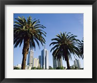Framed Palm trees in a city, Melbourne, Australia