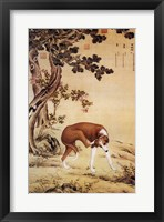 Framed Ten Prized Dogs Chinese Greyhound