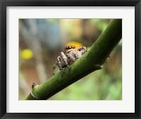 Framed Small Spider