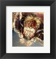 Framed Spider Close Up