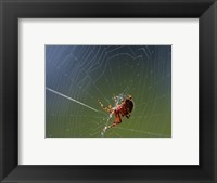 Framed Spider Spinning Its Web