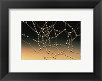 Framed Water Drops on Spiderweb