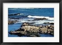 Framed Seals on rocks at the coast, California, USA