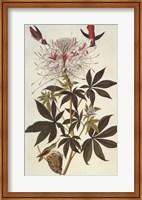 Framed Ruff-Necked Hummingbird