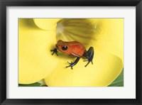 Framed Strawberry Poison Dart Frog