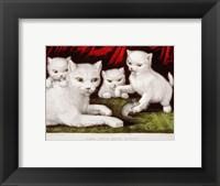 Framed Three Little White Kitties