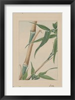 Framed Bamboo Tree Detail