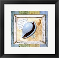 Framed Sea Treasures IV