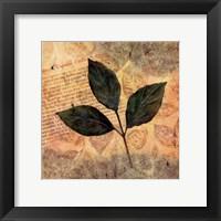 Framed Antiqued Leaves I