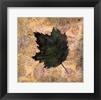 Framed Antiqued Leaves III