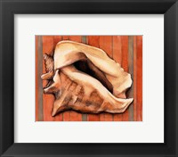 Shell on Stripes I Framed Print
