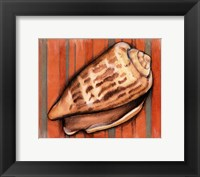 Shell on Stripes III Framed Print
