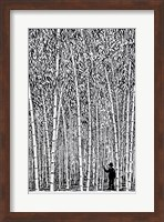 Framed Man and Bamboo