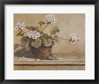 Framed White Geranium