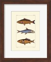 Framed Freshwater Fish II