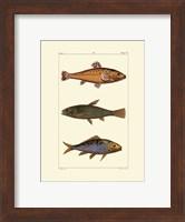 Framed Freshwater Fish IV