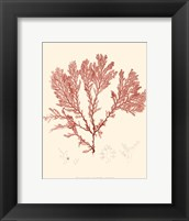 Framed Nature Print in Coral IV