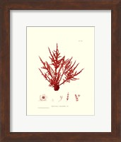 Framed Nature Print in Coral III