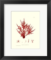 Nature Print in Coral III Framed Print