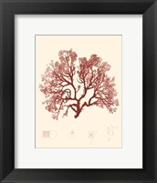 Framed Nature Print in Coral II