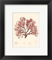 Nature Print in Coral II Framed Print