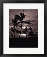 Framed Palms At Night I