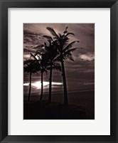 Framed Palms At Night III