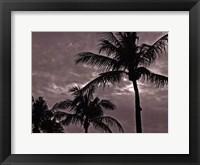 Palms At Night IV Framed Print
