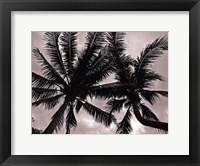 Framed Palms At Night V