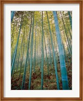 Framed Bamboo Forest, Sagano, Japan