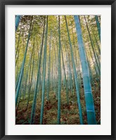 Framed Bamboo Forest, Sagano, Japan
