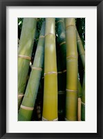 Close-up of bamboo Framed Print