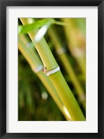 Close-up of bamboo shoots Framed Print