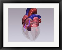 Framed Close-up of a human heart with flow model