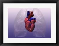Close-up of a human heart model Framed Print