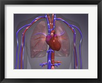 Framed Close-up of the circulatory system