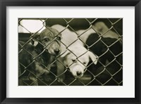 Framed Strays