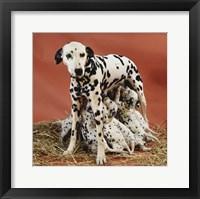 Framed Dalmatians