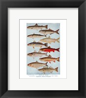 Framed Group of Fishes