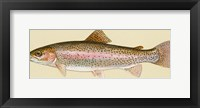 Framed Rainbow trout - long