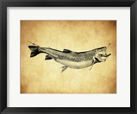 Framed Trout - black and white