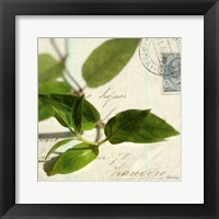 Framed Vine Leaf