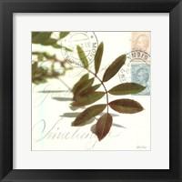 Framed Trailing Leaf