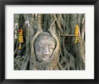 Framed Buddha head in tree roots, Wat Mahathat, Ayutthaya, Thailand