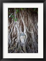 Framed Buddha Head in the Roots of a Tree