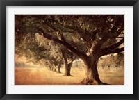 Framed Island Oak