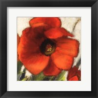 Framed Poppy Splendor Square II (Close up)