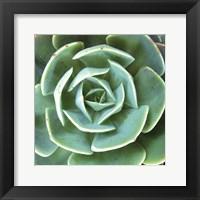 Framed Echeveria I