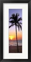 Single Palm I Framed Print