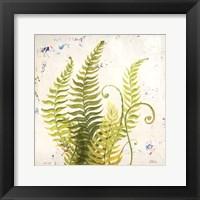 Framed Nice Ferns II